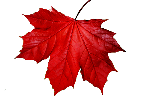 red-leaf.png